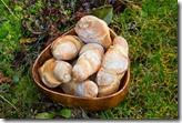 Plötzblog Crust Rolls
